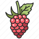 food, fruit, organic, raspberry, berry icon