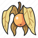 fruit, organic, physalis, healthy, nature icon