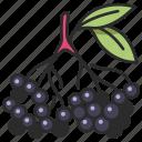 vegan, healthy, food, elderberry, fruit, natural, berry icon