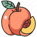 peach, fruit, juicy, leaf, vegan icon