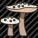 food, fungus, mushroom, parasol, nature icon