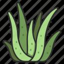 vera, leaf, cosmetic, aloe, herbal, fresh, health