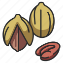 food, nut, snack, pecan, seed icon