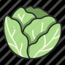 cabbage, plant, harvest, vegetable, fresh, salad icon