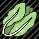 vegan, food, organic, vegetable, fresh, salad, lettuce icon