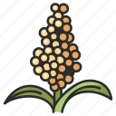 white, grain, seed, sorghum, food, agriculture, crop icon