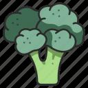 diet, broccoli, healthy, food, organic, vegetable, ingredient