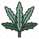 weed, leaf, plant, herb, grass, agriculture