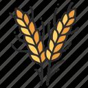 grain, plant, harvest, food, wheat, agriculture, crop