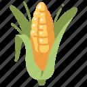 agriculture, maize, vegetable, corn, food, grain