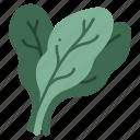 healthy, salad, diet, leaf, food, vegetable, spinach