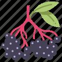 natural, berry, healthy, elderberry, fruit, food, vegan