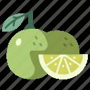 sour, vegan, lime, juicy, fruit, citrus, food icon