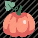 fall, vegetable, pumpkin, halloween, autumn, food