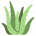 herbal, vera, aloe, leaf, cosmetic, health, fresh