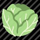 salad, cabbage, fresh, vegetable, harvest, plant icon