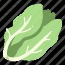 salad, fresh, vegetable, vegan, lettuce, organic, food icon