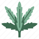 grass, plant, herb, agriculture, leaf, weed