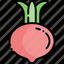 radish, vegetable, healthy food, food