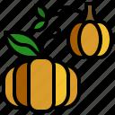 diet, food, fruit, pumpkin, vegetarian icon
