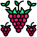 food, fruit, organic, raspberry, vegan icon