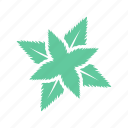 coolness, food, freshness, mint, spearmint icon