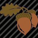 acorn, autumn, nut, oak