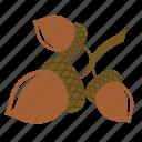 acorn, chestnut, nut, oak