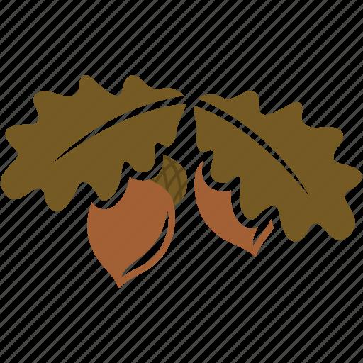 nature, nut, oak, plant, seed icon