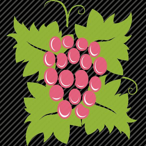 berry, grapes, wine icon