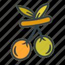 olive, oil, vegetable, healthy