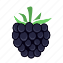 berry, blackberry, food, fruit