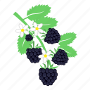 blackberry, food, fruits icon