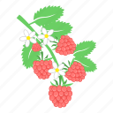 berry, food, raspberries icon