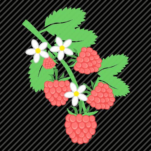 berry, food, raspberries icon