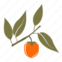berry, food, fruit, persimmon icon