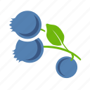 blueberries, food, fruits icon