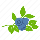 blueberries, blueberry icon