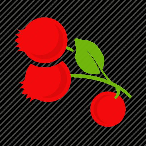 colour, cranberries, cranberry, currant icon
