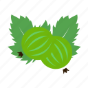 fruit, gooseberry icon