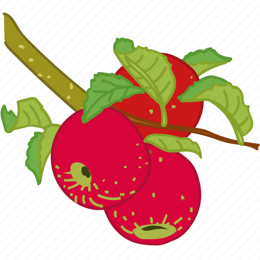 apple, apples, bunch, flavor, juice icon