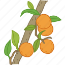 flavor, fruit, juice, oj, orange, oranges icon