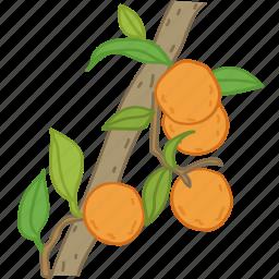 flavor, fruit, juice, oj, orange, oranges icon