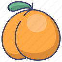 apricot, fruit, food