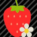 berry, flower, food, fruit, healthy, leaf, strawberry