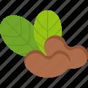 cashew, food, fruit, leaf, nut, seed, tropical icon