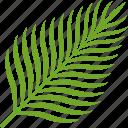 coconut, food, fruit, leaf, palm, tropical icon
