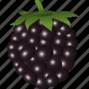 blackberry, dessert, diet, eco, food, fresh, fruit, healthy, juice, nutritio, sweet, vegetarian icon