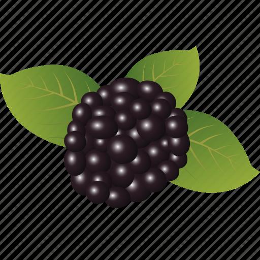 Blackberry, dessert, diet, eco, food, fresh, fruit icon - Download on Iconfinder