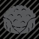 cauliflower, diet, food, fresh, organic, vegetable icon